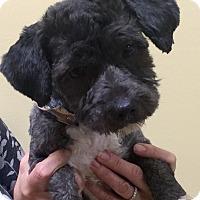 Adopt A Pet :: Sammy - Oswego, IL