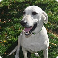Adopt A Pet :: Quarton - Broomfield, CO