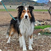 Adopt A Pet :: Leahy - Yreka, CA