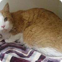 Adopt A Pet :: Humboldt - Lowell, MA