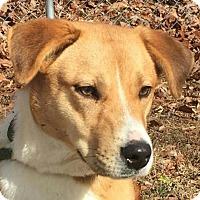 Adopt A Pet :: Ally - Washington, DC