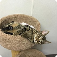 Adopt A Pet :: Dale-Come See Me At Petco - Harrisburg, PA