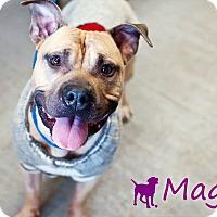 Adopt A Pet :: Magoo - Ottawa, ON