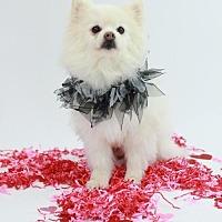 Adopt A Pet :: Frosty - Dallas, TX
