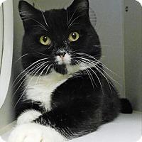 Adopt A Pet :: Chuck Norris - Topeka, KS
