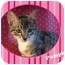 Photo 1 - Domestic Shorthair Kitten for adoption in Encinitas, California - Pumpkin