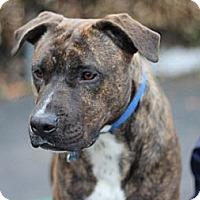 Adopt A Pet :: Hennessey - Port Washington, NY
