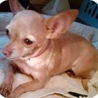 Adopt A Pet :: LIZA JANE - AUSTIN, TX
