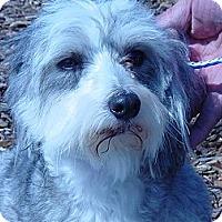 Adopt A Pet :: TeddyBear - Ogden, UT