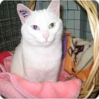 Adopt A Pet :: Emily - Mission, BC