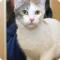 Adopt A Pet :: Edie - Irvine, CA