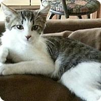 Adopt A Pet :: KitKat - Phoenix, AZ