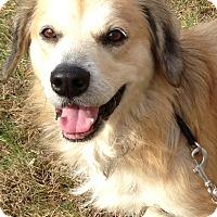 Adopt A Pet :: Jeter - Washington, PA