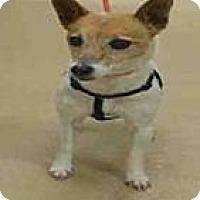 Adopt A Pet :: Daisy - North Ogden, UT