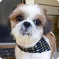 Adopt A Pet :: Waldo - Baton Rouge, LA