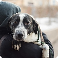 Adopt A Pet :: Laney - Minneapolis, MN