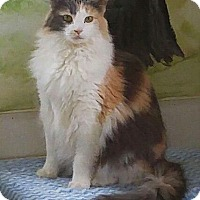 Calico Cat for adoption in Greenback, Tennessee - Mazy