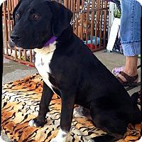 Adopt A Pet :: Larry - Johnson City, TX