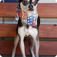 Adopt A Pet :: Bandit - Houston, TX