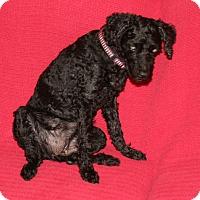 Adopt A Pet :: Sugar - Umatilla, FL