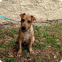 Adopt A Pet :: Fenway - Oviedo, FL