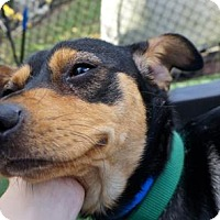 Adopt A Pet :: Luca - Lakeland, FL