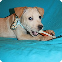 Adopt A Pet :: Jack (HAS BEEN ADOPTED) - Albany, NY