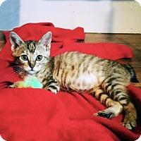 Adopt A Pet :: Kerry - Austin, TX