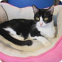 Adopt A Pet :: Lady Grace - Glendale, AZ