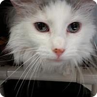 Adopt A Pet :: Willow - Chippewa Falls, WI