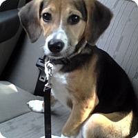 Adopt A Pet :: Selena - Willingboro, NJ