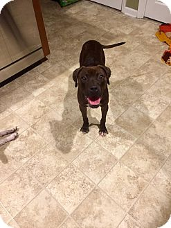 Boxer Mix Dog for adoption in Jacksonville, North Carolina - Lizzy