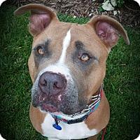 """Adopt A Pet :: Aesop """"Ace"""" - Newport Beach, CA"""