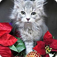 Adopt A Pet :: POGO -ADOPTION PENDING - Arlington, VA