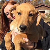 Adopt A Pet :: Piper - Foster, RI