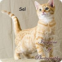 Adopt A Pet :: Sal - Oklahoma City, OK