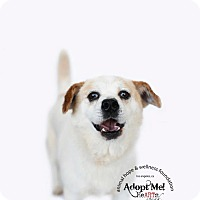 Adopt A Pet :: DERRICK - Sherman Oaks, CA