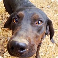 Adopt A Pet :: Superdog - Kingston, TN