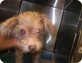 Small Dog Rescue Melbourne Fl