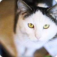Adopt A Pet :: Dennis - Lincoln, NE