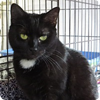 Adopt A Pet :: Maddy - Unionville, PA