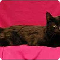 Adopt A Pet :: Louise - Sacramento, CA