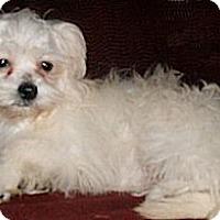 Adopt A Pet :: Kelly - Mooy, AL