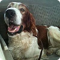 Adopt A Pet :: Murphy - Minnetonka, MN