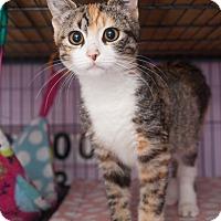 Adopt A Pet :: Tabitha - Shelton, WA