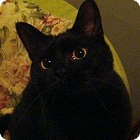 Adopt A Pet :: Puddy - Muncie, IN