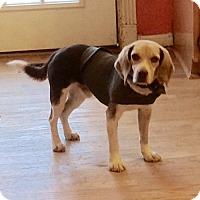 Adopt A Pet :: Choco - Dumfries, VA