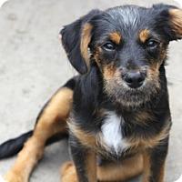 Adopt A Pet :: Billy Bob - MEET HIM - Norwalk, CT