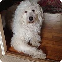 Adopt A Pet :: Lucy  Adopted - Tulsa, OK