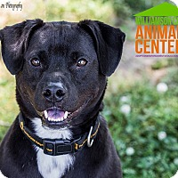 Adopt A Pet :: Harrison - in Maine - kennebunkport, ME